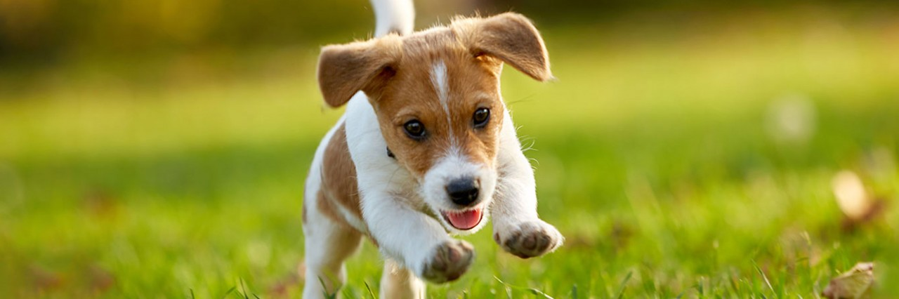 The Complete Guide to Raising a Puppy