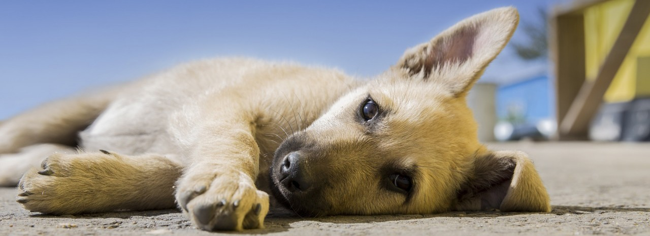 You Need to know this Before you get a puppy