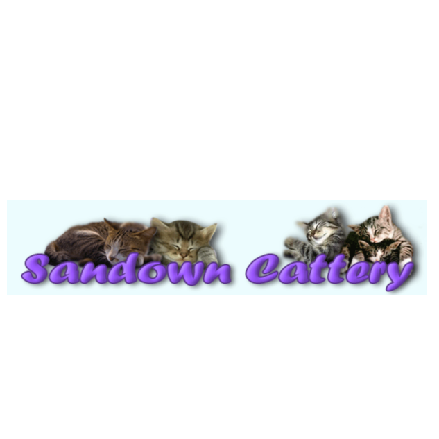 Sandown Boarding Cattery