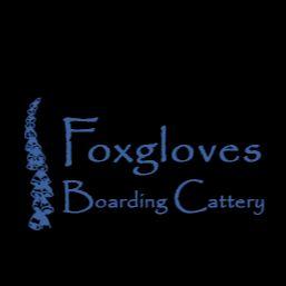 Foxgloves Boarding Cattery