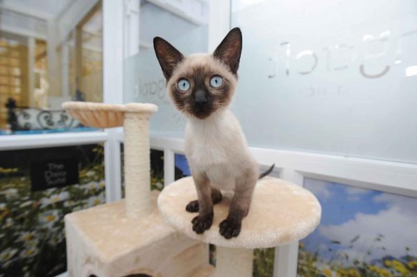 Feline guest