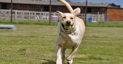 Dog running at York Dog Park